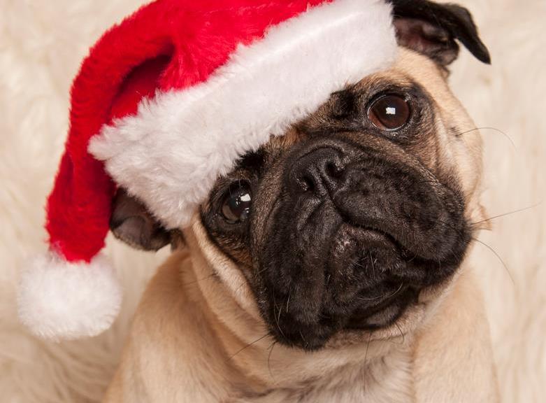 Dexter-Christmas3